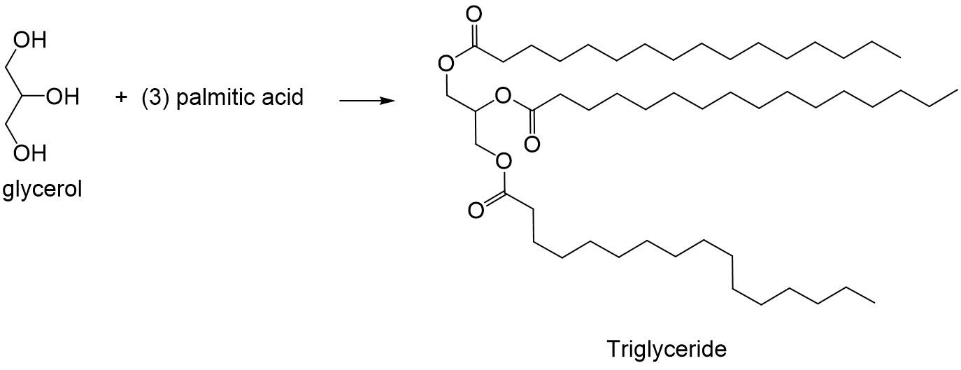 Organic Chemistry Of Lipids Organic Chemistry Help