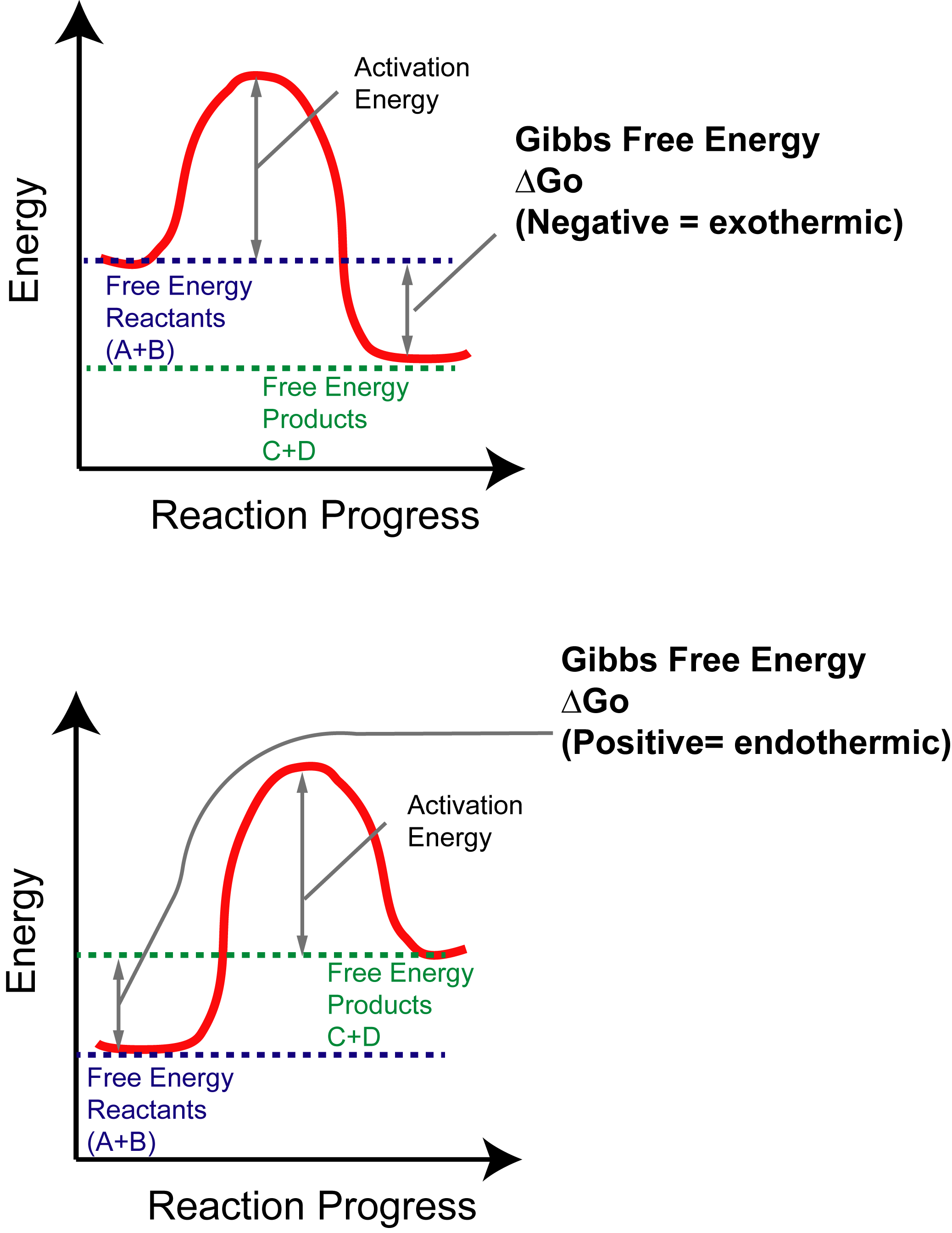 gibbs free energy and activation energy relation